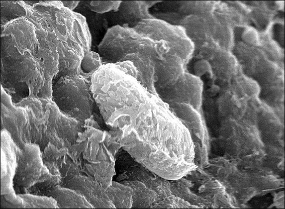 nasa found alien bacteria by - photo #16